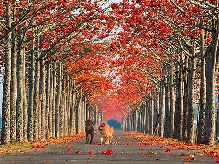 Одни из самых красивых улиц мира